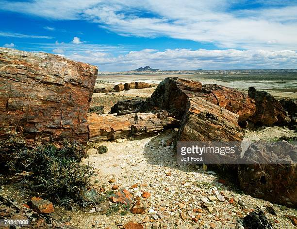 Patagonia, Petrified Forest National Park, Close-up of broken rock formations on the shore
