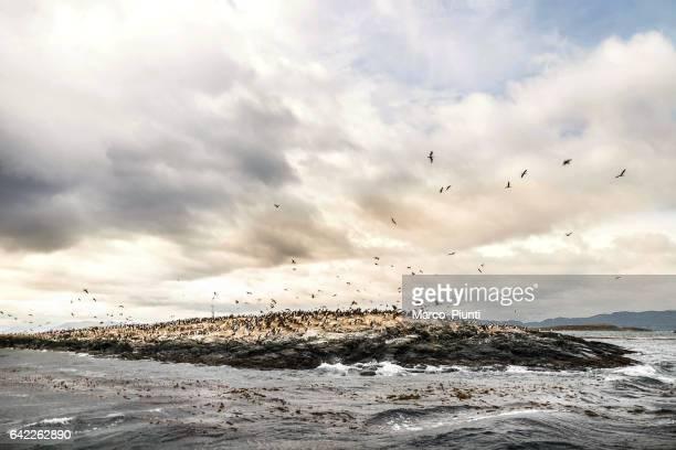 Patagonia - View of Cormorant Bird Colony on Island
