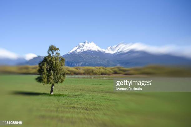 patagonian landscape - radicella stock pictures, royalty-free photos & images