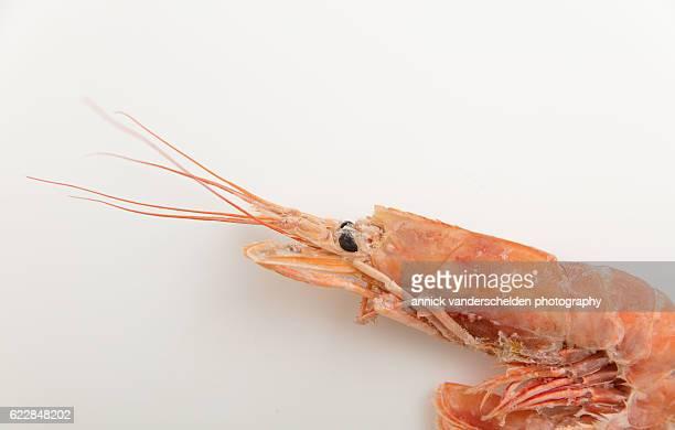 Patagonian prawn (Pleoticus muelleri).