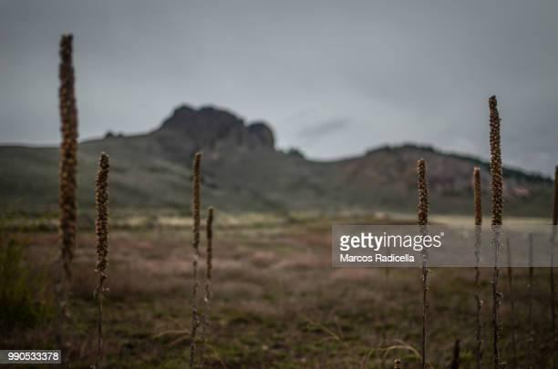patagonian steppe - radicella photos et images de collection