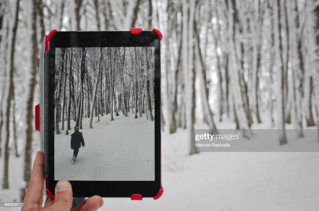 Patagonic forest in winter : Stock Photo