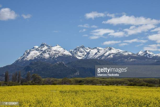 patagonic landscape - radicella stock pictures, royalty-free photos & images