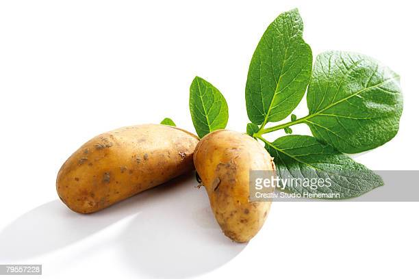 patatoes with leaves - prepared potato stock pictures, royalty-free photos & images