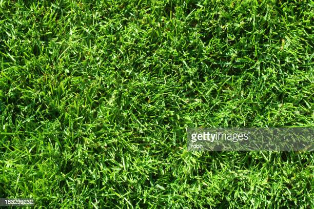 A patch of green grass serving as a background