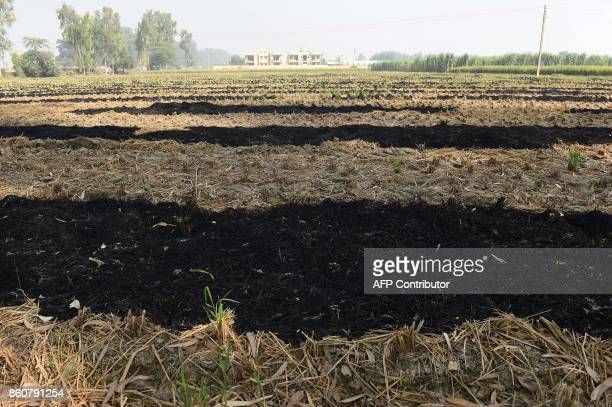 Patches of burned straw stubble are seen in a paddy field in Sonipat in the northern state of Haryana on October 13, 2017. A major factor in the air...