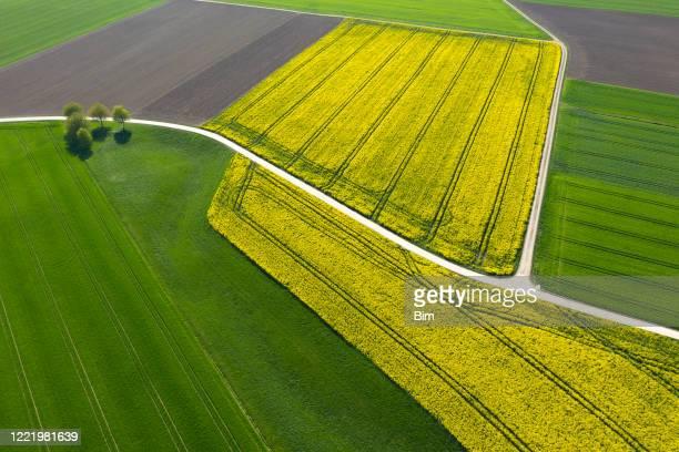 patchwork de campos agrícolas, vista aérea - brassica napus l - fotografias e filmes do acervo