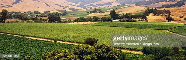 patchwork of vineyards is seen in early summer, trees, farm buildings and rolling hillsides in the background, santa ynez valley - timothy hearsum - fotografias e filmes do acervo