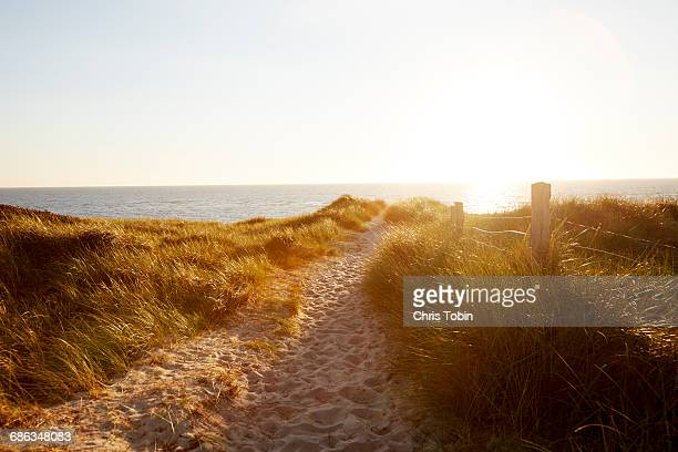 Path across the dunes at sunset