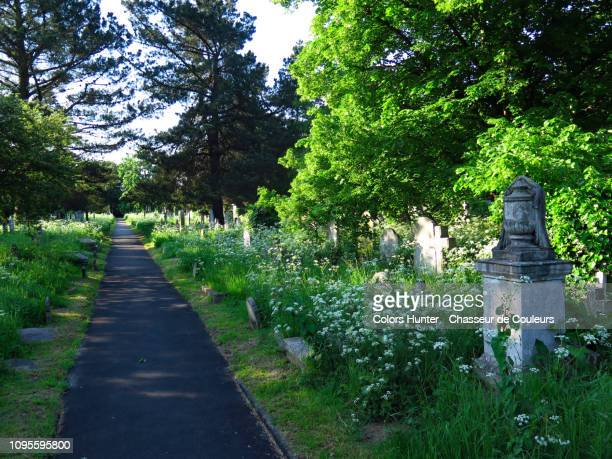 path and tombstones at brompton cemetery london - cemetery stock pictures, royalty-free photos & images