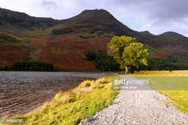 path and tree, buttermere, lake district, cumbria, england - cockermouth stock pictures, royalty-free photos & images