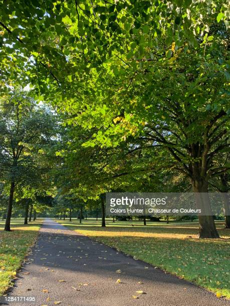 path and trees inside hyde park in london - hyde park london stock pictures, royalty-free photos & images