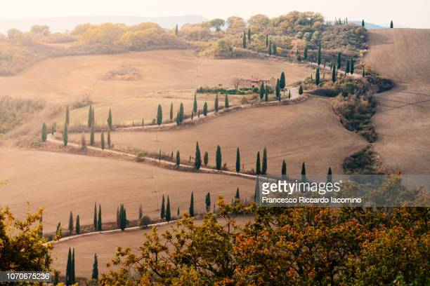 path and unpaved road in tuscany - iacomino italy foto e immagini stock