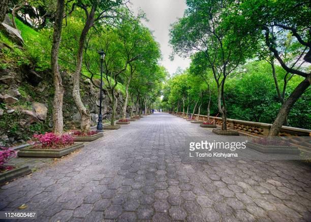 path at the park in mexico city, mexico - ciudad de méxico fotografías e imágenes de stock