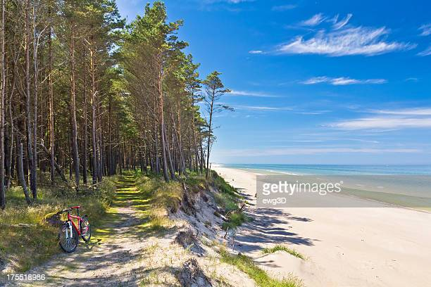 path at the seashore, baltic sea - pine woodland stock pictures, royalty-free photos & images