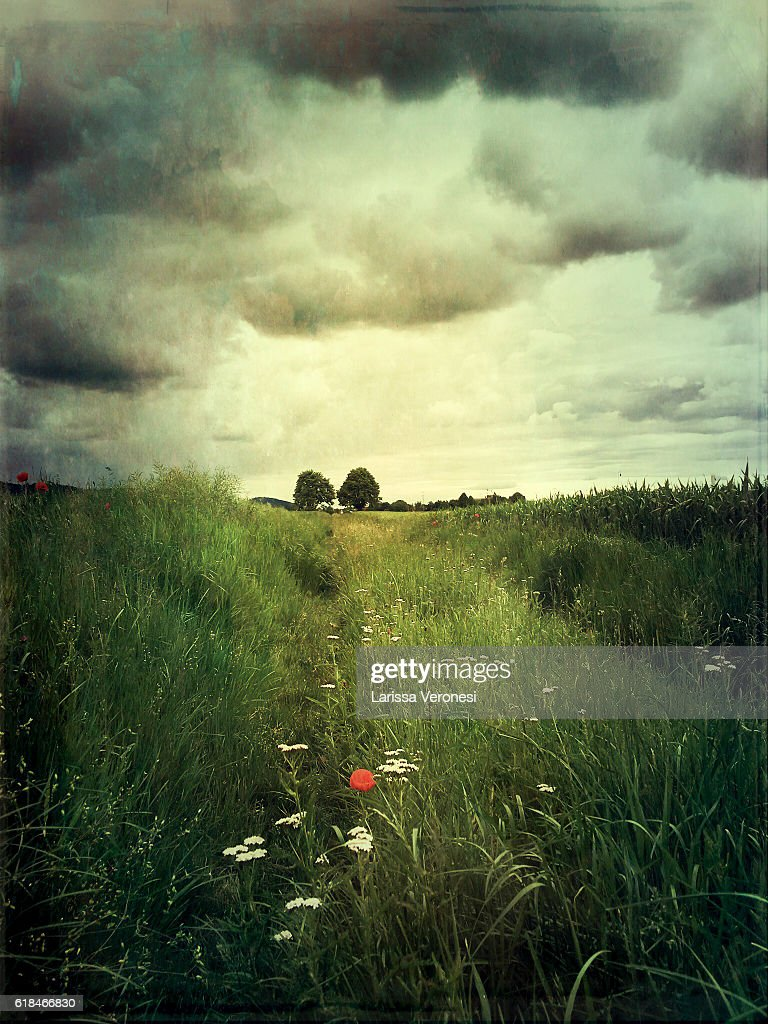 path between fields : Stock Photo
