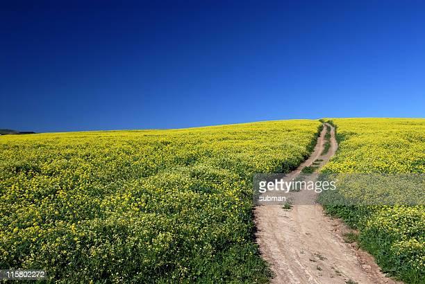 Weg zwischen Blumen
