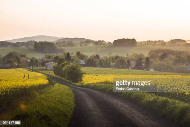 A path between two fields of rape is pictured in the evening light on April 29 2018 in Kunnersdorf Germany