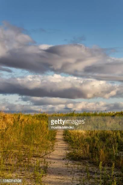 path blurred by weeds - vicente méndez fotografías e imágenes de stock