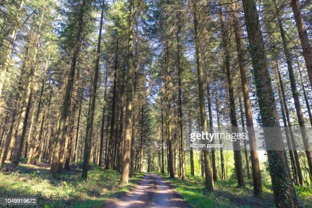 path crossing a forest in france - trilha passagem de pedestres - fotografias e filmes do acervo