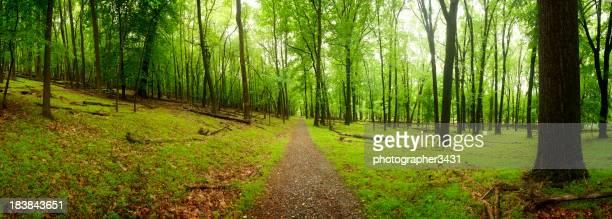 Weg mitten im Wald