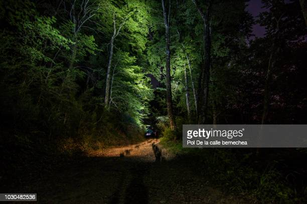 path forest night artificial lighting - woodland stock pictures, royalty-free photos & images