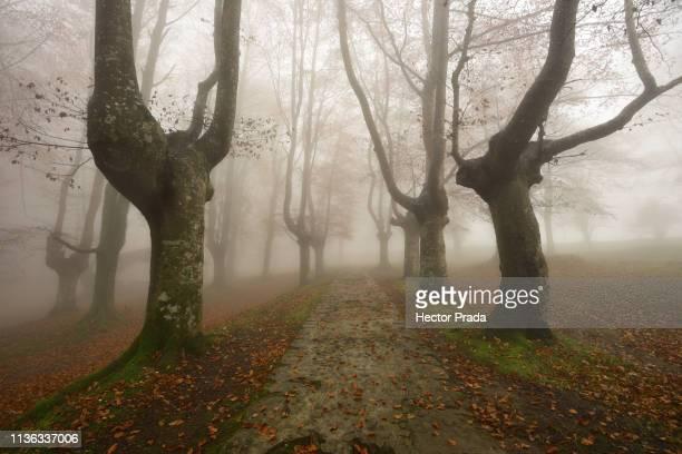 path in a autumn foggy morning - hector vivas fotografías e imágenes de stock