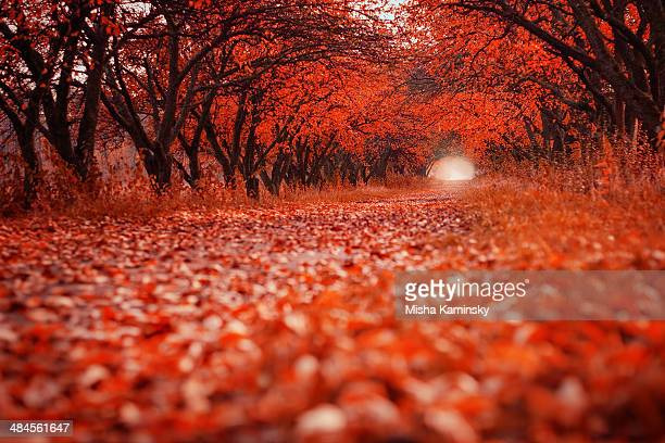 path in autumn garden - november background stock photos and pictures