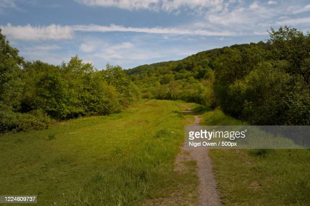 path in forest in woodland, wales, uk - nigel owen stock pictures, royalty-free photos & images