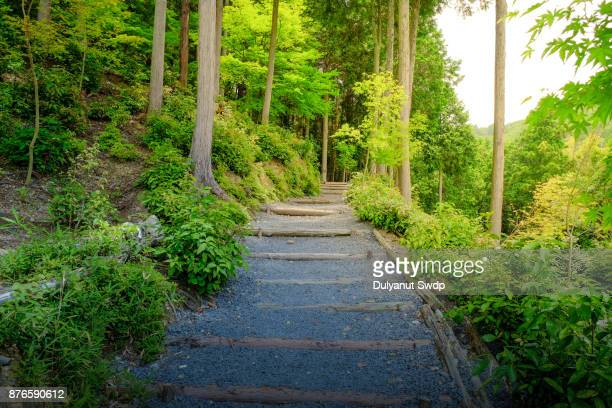 A Path in forest, Kyoto City