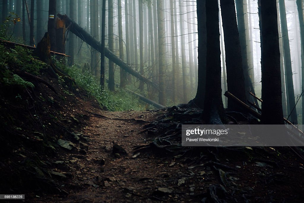Path in forest : Stock Photo