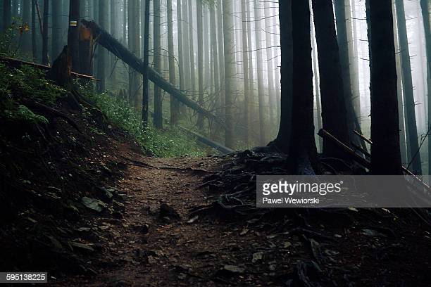 path in forest - fallen tree stock pictures, royalty-free photos & images
