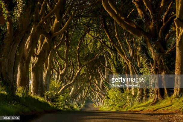 path in green forest, ballymoney, antrim, county antrim, northern ireland, uk - irlanda fotografías e imágenes de stock