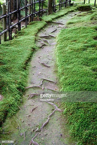 A path in moss garden