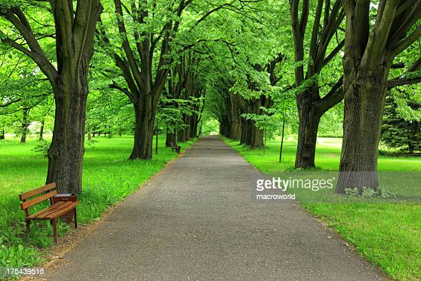 Path in Park