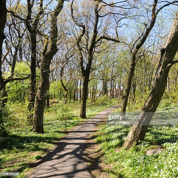 Path in sun in park