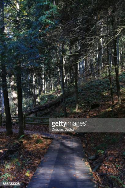 Path in the forest at Slide Mountain Wilderness, Phoenicia, New York, USA