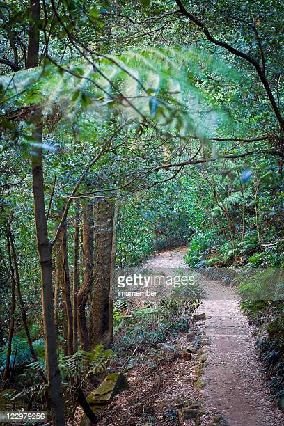 Path in the forest, national park Blue Mountains Australia