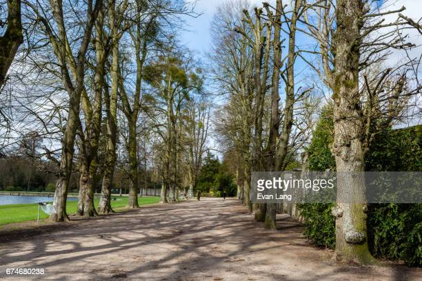 path in the forest of rambouillet - ランブイエ ストックフォトと画像