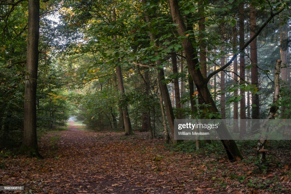 Path In The Forest : Stockfoto