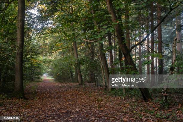 path in the forest - william mevissen stockfoto's en -beelden
