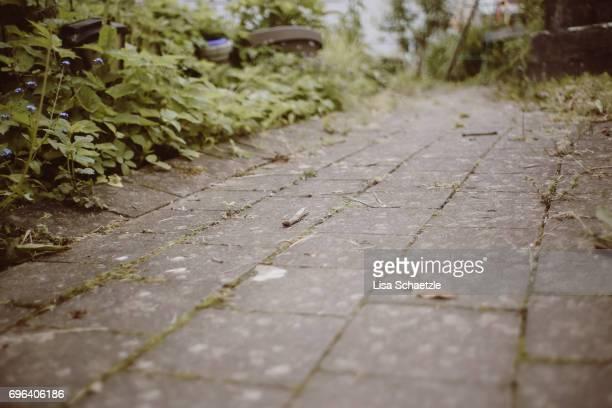 a path in the garden - hausgarten stockfoto's en -beelden
