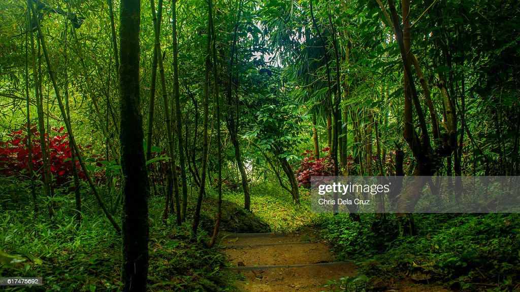 Path in the garden with trees on foreground : Stock Photo