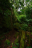 Path in the green crag in the rainforest