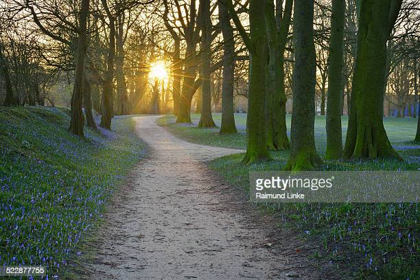Path in the Park with Crocus at Sunrise