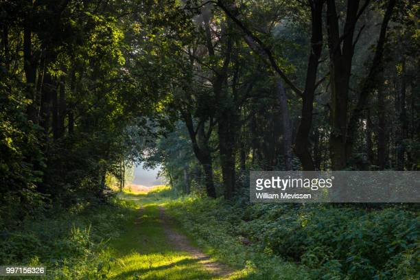 path into the light - william mevissen stock pictures, royalty-free photos & images