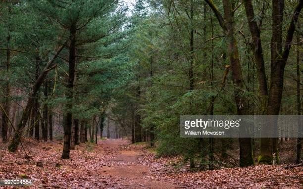 path into the woods - william mevissen bildbanksfoton och bilder