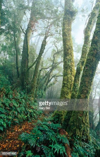 Path leading through tropical rain forest