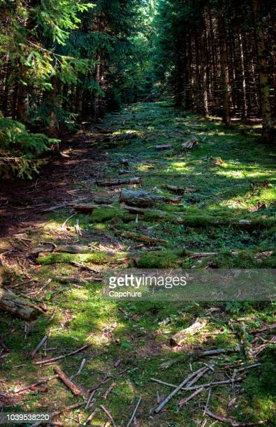 a path leads upwards between the trees of a forest located in the swiss jura mountains. the forest is lush green and moss and sticks and trees cover the forest floor. - forest floor stock photos and pictures
