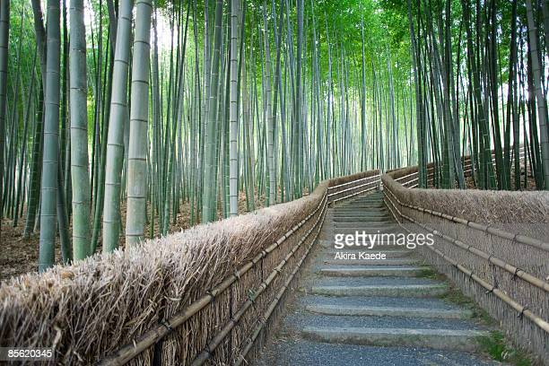 Path of Bamboo grove